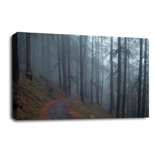 Forest Landscape Canvas Art Path Trees Wall Picture Print